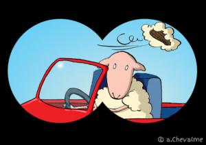 Mouton flashé sans moumoute - © Anne Chevalme